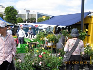 Takapuna Market
